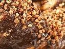 Рецепта Печена изварена пасха